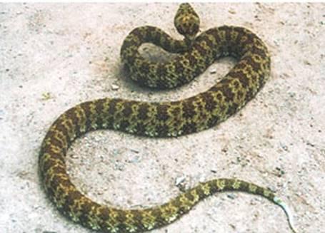 大量迁徙鸟类成为蛇类