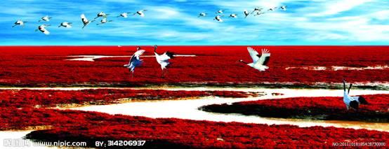 红海滩风景区位于渤海湾东北部,地处辽河三角洲湿地内。辽河三角洲的盘锦市,是一处著名的国家级自然保护区。在渤海之滨的这块20多平方公里的湿地苇丛中,栖息着丹顶鹤、黑嘴鸥等236种鸟类。它以全球保存得最完好、规模最大的湿地资源为依托,以举世罕见的红海滩、世界最大的芦苇荡为背景,是一处自然环境与人文景观完美结合的纯绿色生态旅游系统。  盘锦红海滩风光  盘锦红海滩风光 红海滩的红是它的独特亮点,简直就是红色的海洋,如果是在十月份,颜色更加鲜艳夸张。一片红色的海洋着实让每个到这里的人震撼。  盘锦红海滩风光 景区