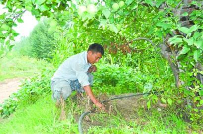 海城市岔沟镇庞家店村贾家堡子果农邵奎一大早便来到自家的苹果园.