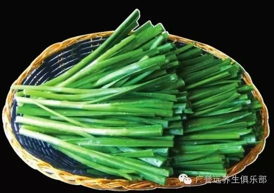 韭菜根初生结构示意图