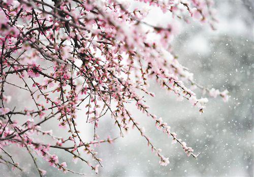 葫芦岛,朝阳,阜新,锦州等地却飘起了雪花,部分地区甚至下起了鹅毛大雪
